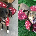 You Can Turn Your Pet Dog Into A Demogorgon Dog With This Handmade Costume