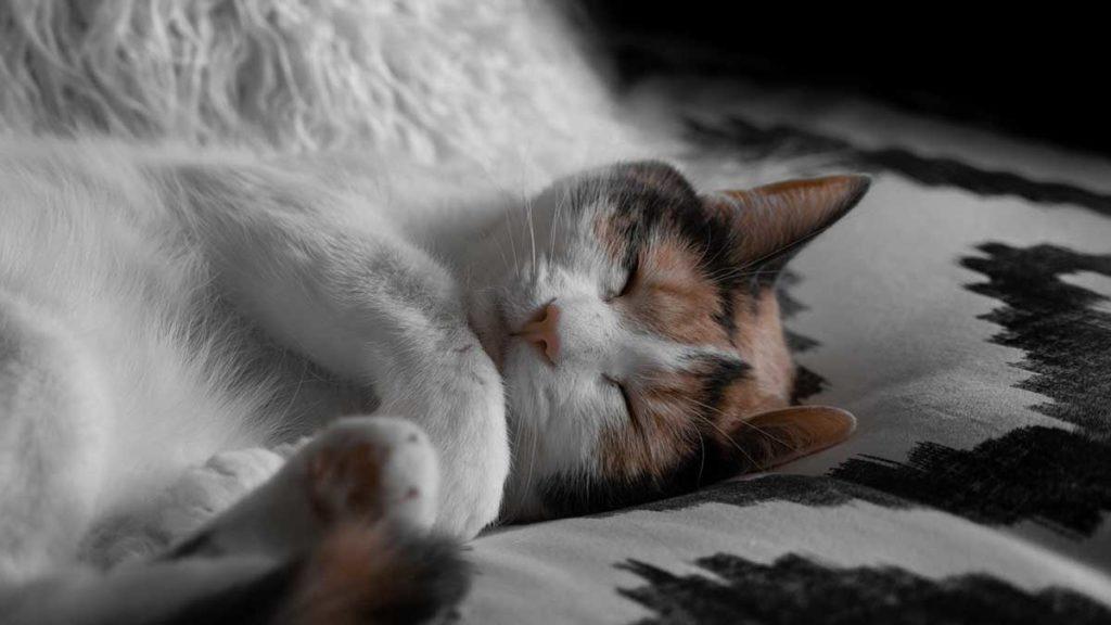 The Secrets to a Perfect Night Sleep