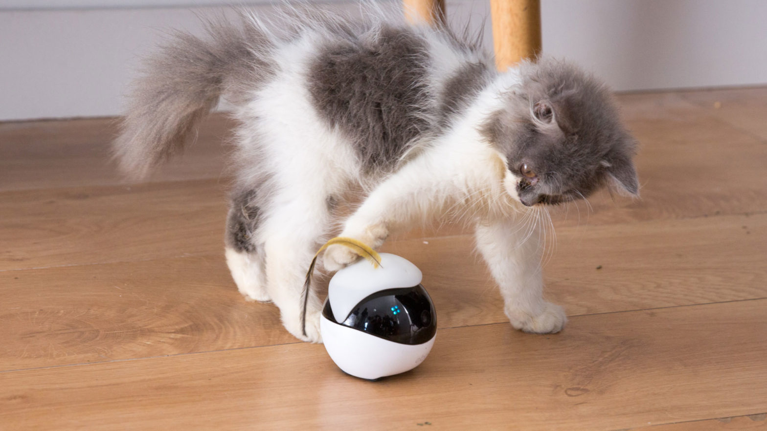 Ebo Smart Robot Companion For Cats