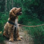 Three Tips For Taking Care Of Your Pet Dog