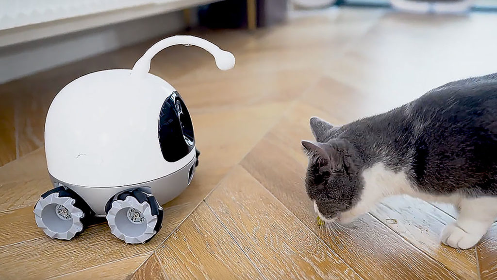 Rocky Companion and Playmate Robot For Pets