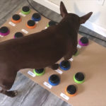 "Speech-Language Pathologist Teaches Her Pet Dog To ""Talk"" Using Buttons"