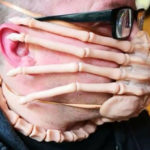 Making The Best Out Of Bad Times: Jeff Barnaby's DIY <em>Alien</em> Facehugger Face Mask
