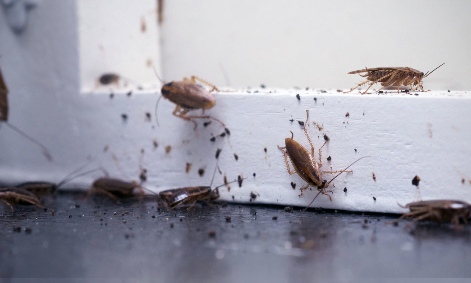 Prevent Bugs From Taking Over Your Home