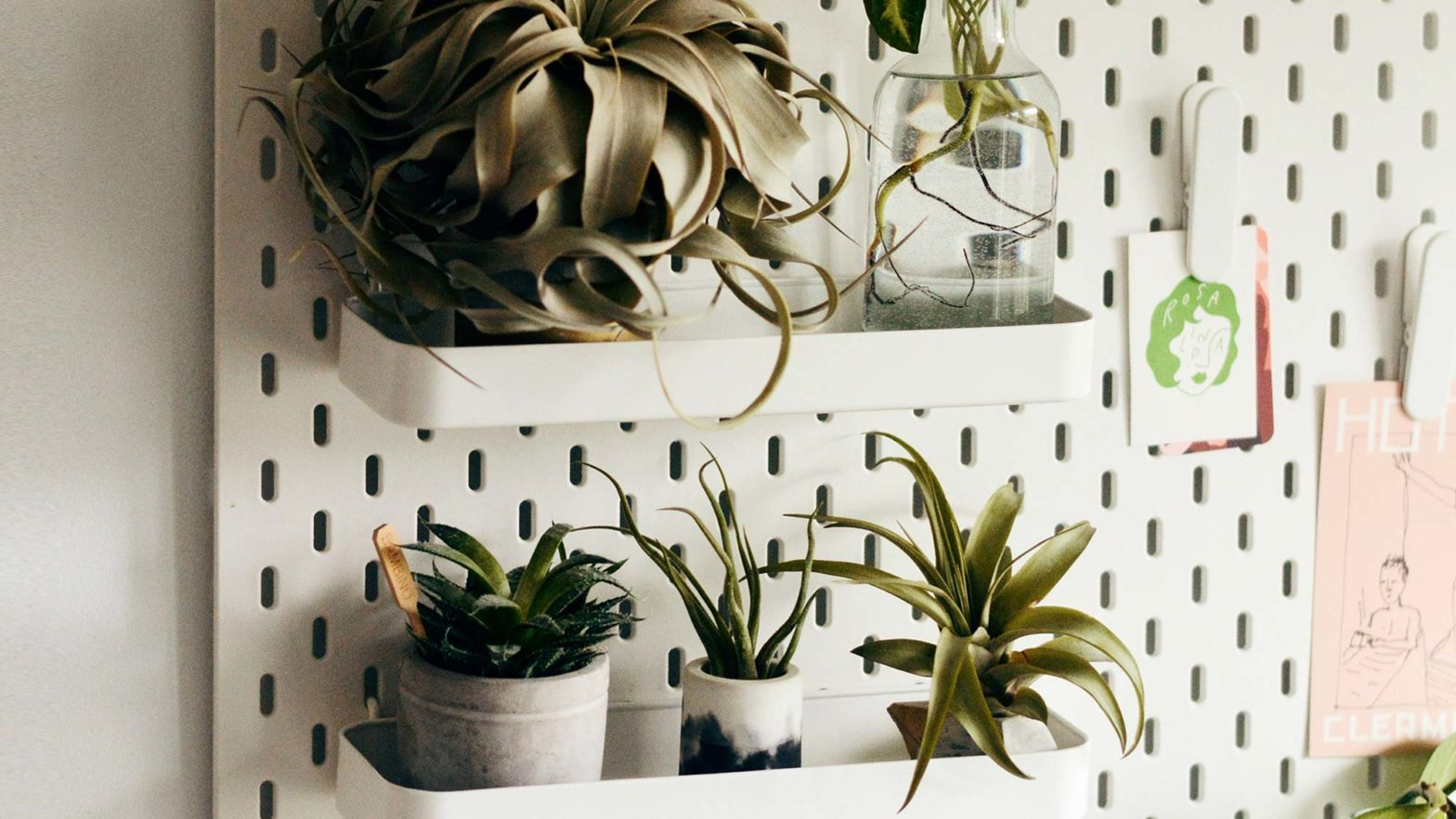 Some Awesome Technology for House Plants