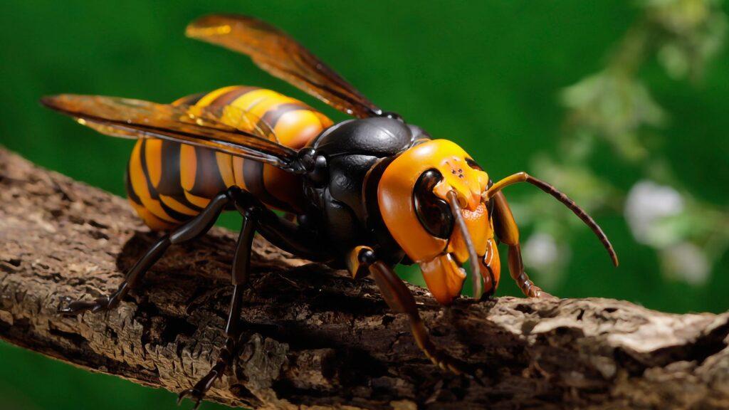 Revoltech RevoGeo Asian Giant Hornet Figure