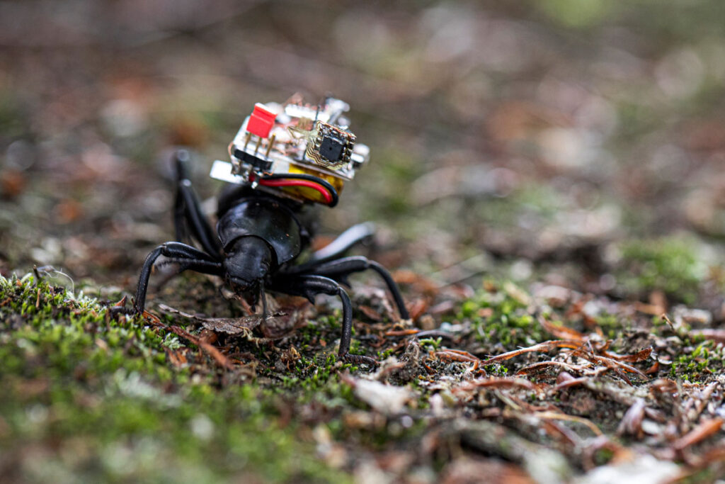 Robotic Camera Backpack for Insects