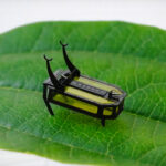Researchers Developed Insect-scale Robot That Moves Without Battery And Motor