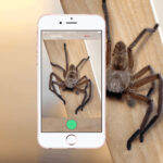Critterpedia Mobile App: Identifying A Snake Or Spider Is Just A Photo Away
