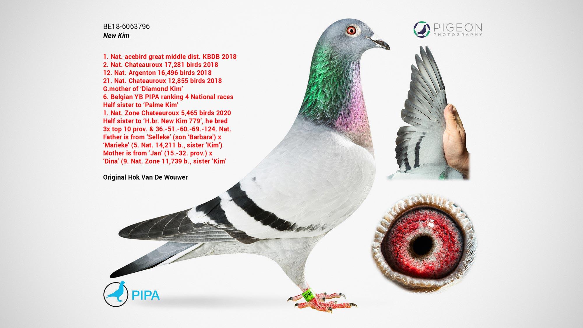 New Kim Racing Pigeon Auction