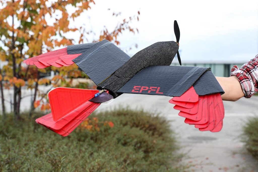 Raptor-inspired Drone with Morphing Wing and Tail