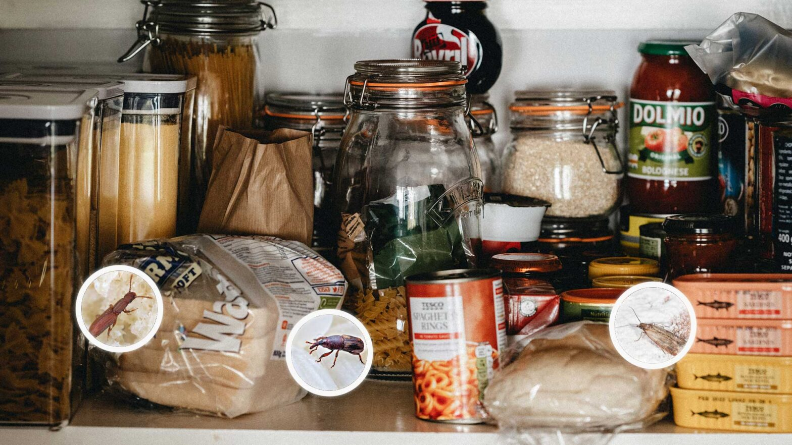 Signs Of Pantry Pests