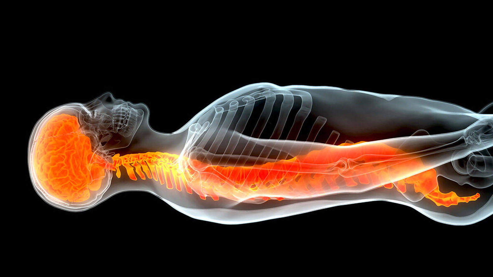Spinal Cord Repair Using Stem Cells Yale University