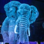 German-based Circus Troupe Uses Hologram Of Animals As Part Of Its Performances