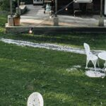 4 Yard Maintenance Ideas