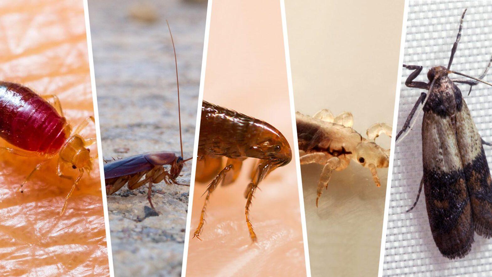 5 Creepy Crawlies You Share Your Home