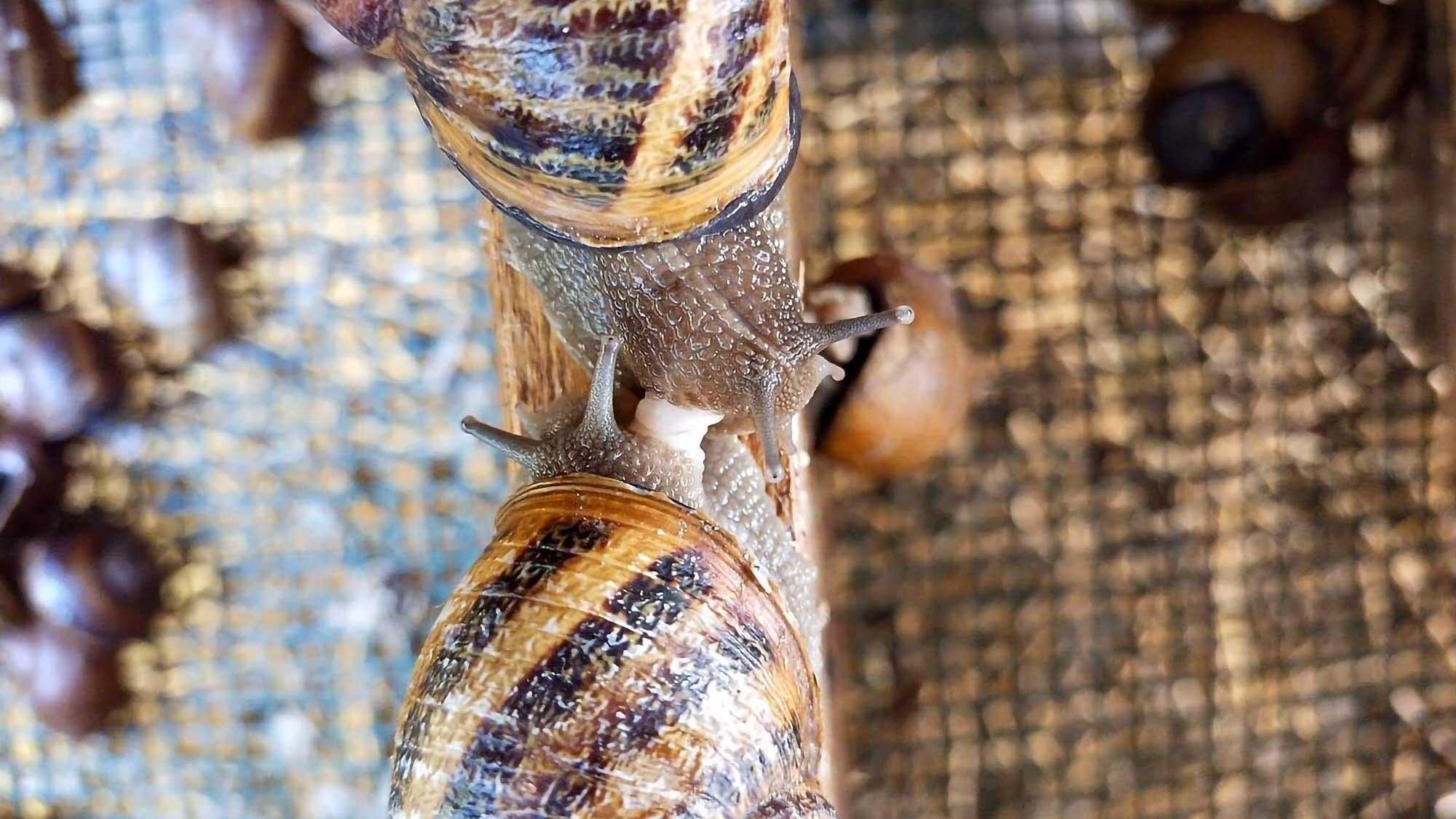 Les Escargots Desrocher Snail Slime Soap