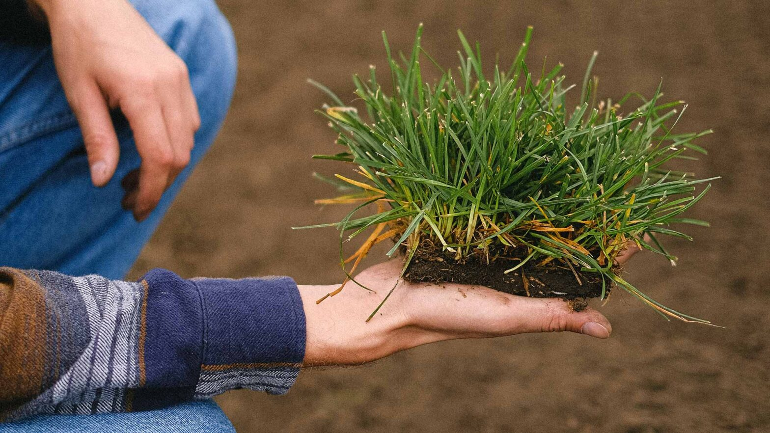 The 5 Most Popular Types Of Lawn Seed