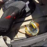 Watch What Happens When A Mantis Shrimp Strikes A Human