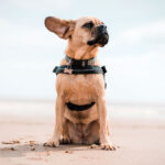 Mixed Breed Dogs That Are Great For First Time Owners