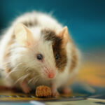 How To Get Rid Of Mice In Your House And Prevent Them From Returning
