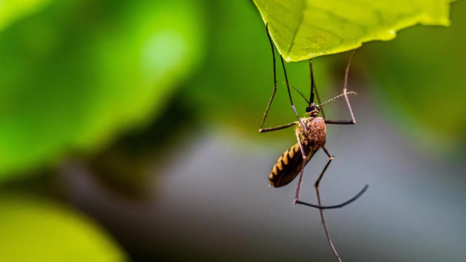 Tips To Ensure Proper Mosquito Control In Your Flowood Home