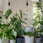 Different Types Of Lights For Indoor Plants And How To Choose Them