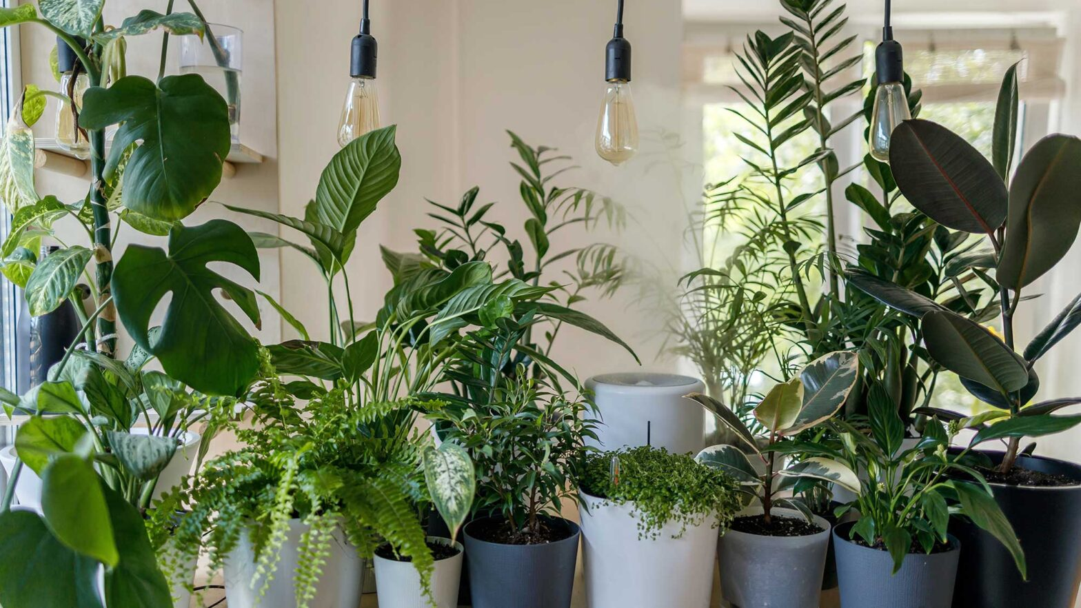 Different Types of Lights For Indoor Plants